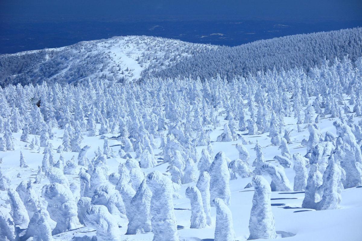 限定開催の蔵王樹氷のライトアップと白濁の蔵王温泉おすすめ