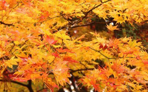 【東京から日帰りで行ける】11月に紅葉も温泉も楽しみたい方へオススメの旅行先を紹介します